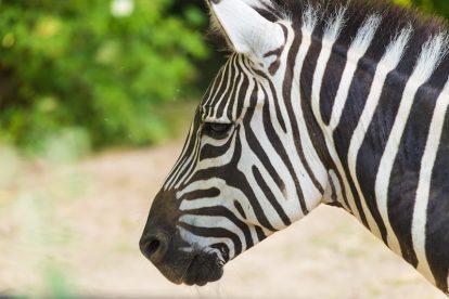 empresas zebra x startups unicórnios