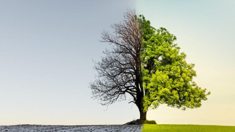 ESG –Cultura Organizacional