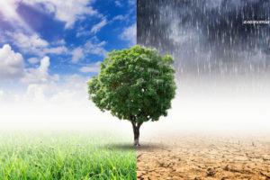 Como pequenas empresas podem ajudar a combater a crise climática