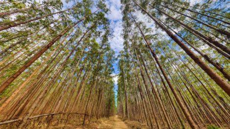 ComBio e a revolução da biomassa