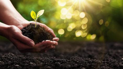 Compensação de carbono com impacto social